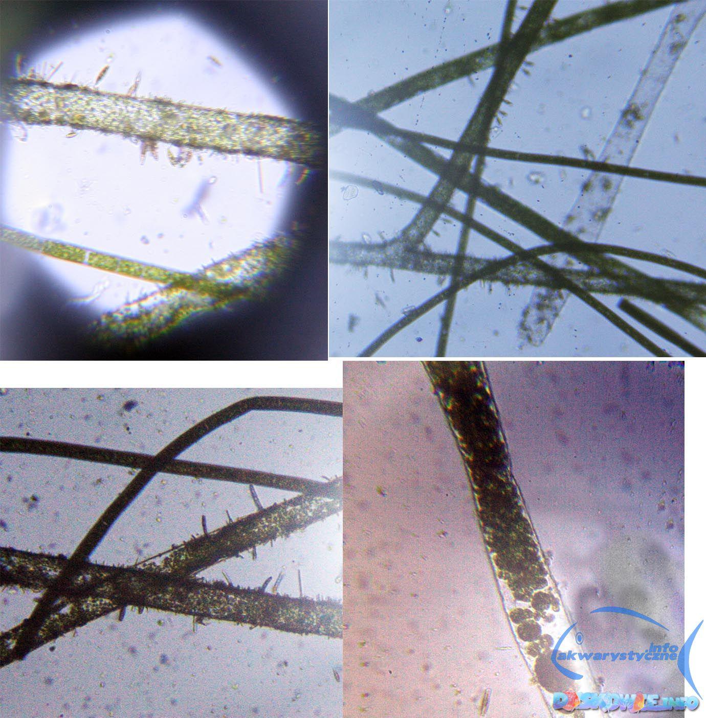 [Obrazek: mikroszkop.jpg]