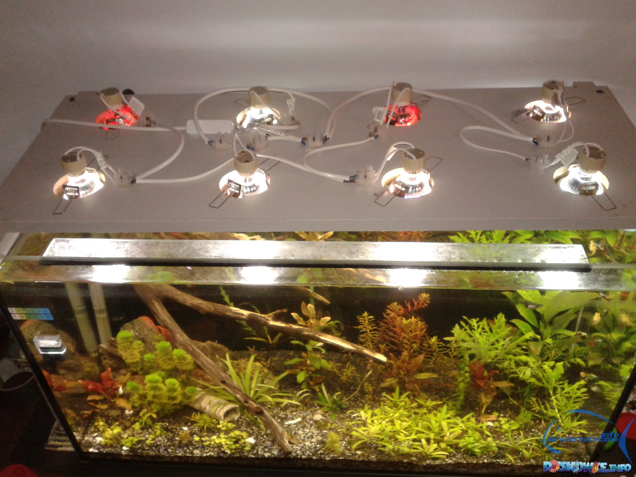 Led Gu10 Oświetlenie Do Twojego Akwarium